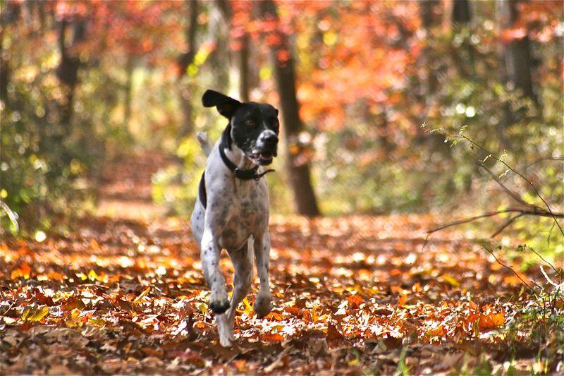 Autumnrun